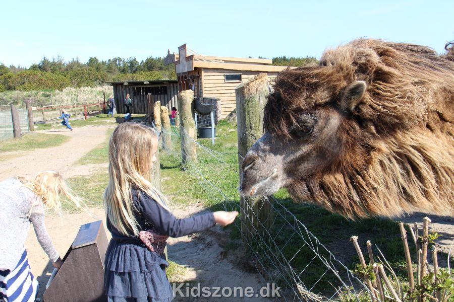Zoopark næstved lille bh er