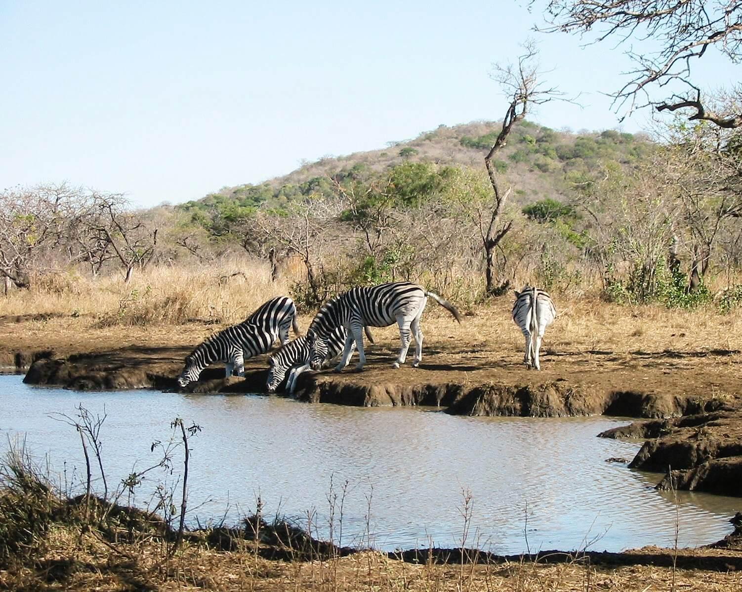 Syd Afrika - ferieminder