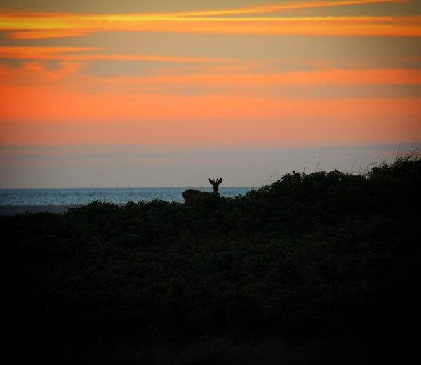 Fanø, Esbjerg - Perfekt solnedgang - billedet er taget af @ByAnnette.dk