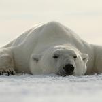 Forberedelser til -16 grader (Svalbard)