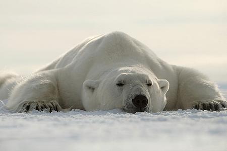 Familietur til Svalbard