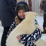 Huskyhundehvalp fra Svalbard - Vilmarkscenter