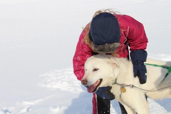 Svalbard - Hundeslædehund  // Billedet er taget af @byAnnette.dk