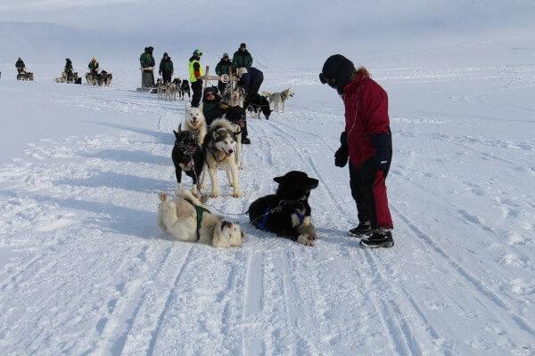 GreenDog Svalbard - Punkteret hund  / Billedet er taget af @ByAnnette.dk