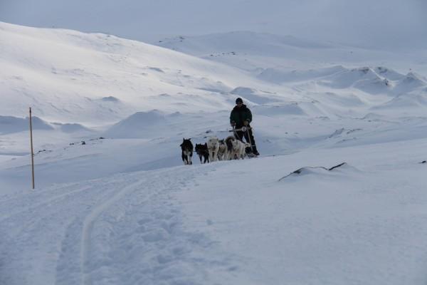 Greendog Svalbard slædetur   // Billedet er taget af @byAnnette.dk