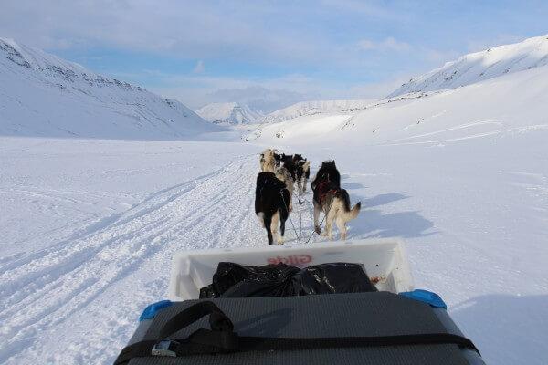 Hundeslæde tur  / Billedet er taget af @ByAnnette.dk