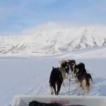 Svalbard, dag 2 &#8211; Hundeslædeturen <3