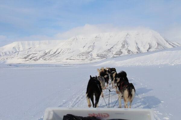 Svalbard - Hundeslæde tur  / Billedet er taget af @ByAnnette.dk